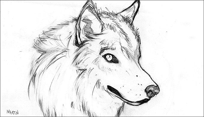 Disegni di lupo pin lupo disegno da colorare disegni for Lupo disegno a matita
